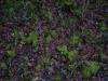 Boden-Gras-Moos-Blumen_Textur_A_PC217946