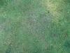 Boden-Gras-Moos-Blumen_Textur_B_00770