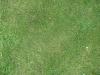 Boden-Gras-Moos-Blumen_Textur_B_00848