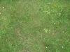Boden-Gras-Moos-Blumen_Textur_B_00849