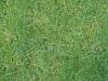 Boden-Gras-Moos-Blumen_Textur_B_00860