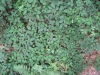 Boden-Gras-Moos-Blumen_Textur_B_01032