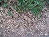 Boden-Gras-Moos-Blumen_Textur_B_01034
