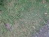 Boden-Gras-Moos-Blumen_Textur_B_01037