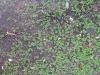 Boden-Gras-Moos-Blumen_Textur_B_02722