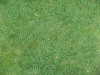 Boden-Gras-Moos-Blumen_Textur_B_1090
