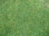 Boden-Gras-Moos-Blumen_Textur_B_1091
