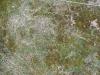 Boden-Gras-Moos-Blumen_Textur_B_2111