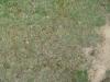 Boden-Gras-Moos-Blumen_Textur_B_2115