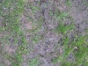 Boden-Gras-Moos-Blumen_Textur_B_5603