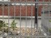 Gebaeude-Architektur_Textur_A_P4222575