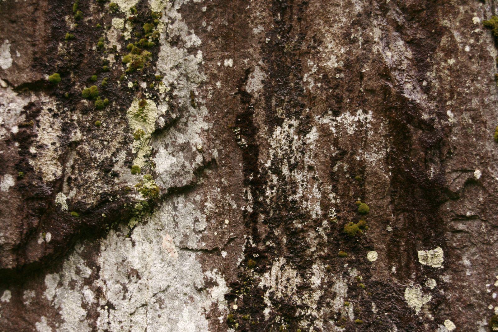Grunge-Dreck_Textur_A__MG_2625