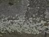 Grunge-Dreck_Textur_A_P4131160