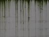 Grunge-Dreck_Textur_A_P6223662