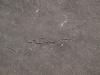 Grunge-Dreck_Textur_A_P8299328