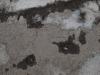 Grunge-Dreck_Textur_A_P8299367