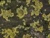 Grunge-Dreck_Textur_A_P9194960