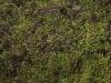 Grunge-Dreck_Textur_A_P9195111