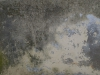 Grunge-Dreck_Textur_A_PB026451