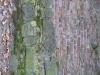 Grunge-Dreck_Textur_B_0926