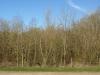 Hintergrund-Landschaft-Natur-Panorama_Textur_A_P4201433