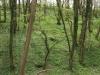 Hintergrund-Landschaft-Natur-Panorama_Textur_A_P4231707