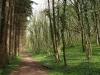 Hintergrund-Landschaft-Natur-Panorama_Textur_A_P4231709
