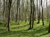 Hintergrund-Landschaft-Natur-Panorama_Textur_A_P4231713