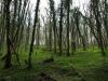 Hintergrund-Landschaft-Natur-Panorama_Textur_A_P4231724