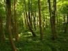 Hintergrund-Landschaft-Natur-Panorama_Textur_A_P4302891
