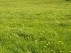 Hintergrund-Landschaft-Natur-Panorama_Textur_A_P4302892