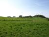 Hintergrund-Landschaft-Natur-Panorama_Textur_A_P5042390