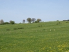 Hintergrund-Landschaft-Natur-Panorama_Textur_A_P5042391