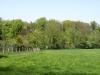 Hintergrund-Landschaft-Natur-Panorama_Textur_A_P5042468