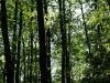 Hintergrund-Landschaft-Natur-Panorama_Textur_A_P5112631