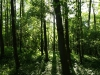 Hintergrund-Landschaft-Natur-Panorama_Textur_A_P5112632
