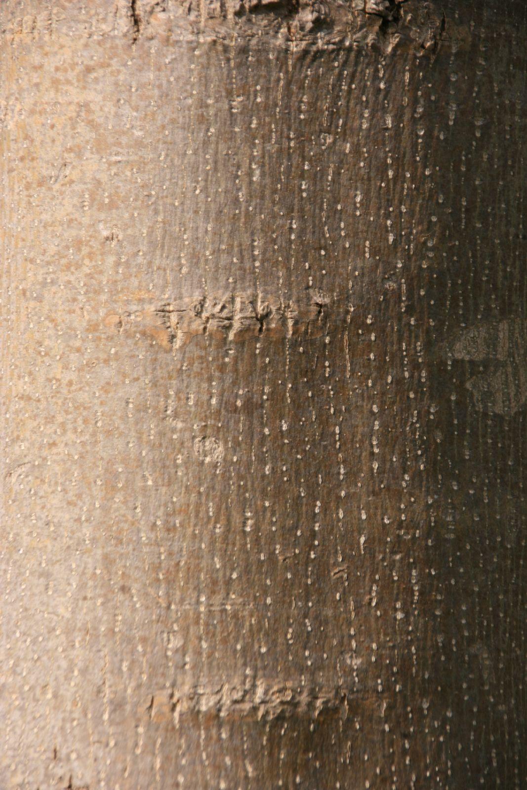 Baum-Rinde_Textur_A_MG_3532