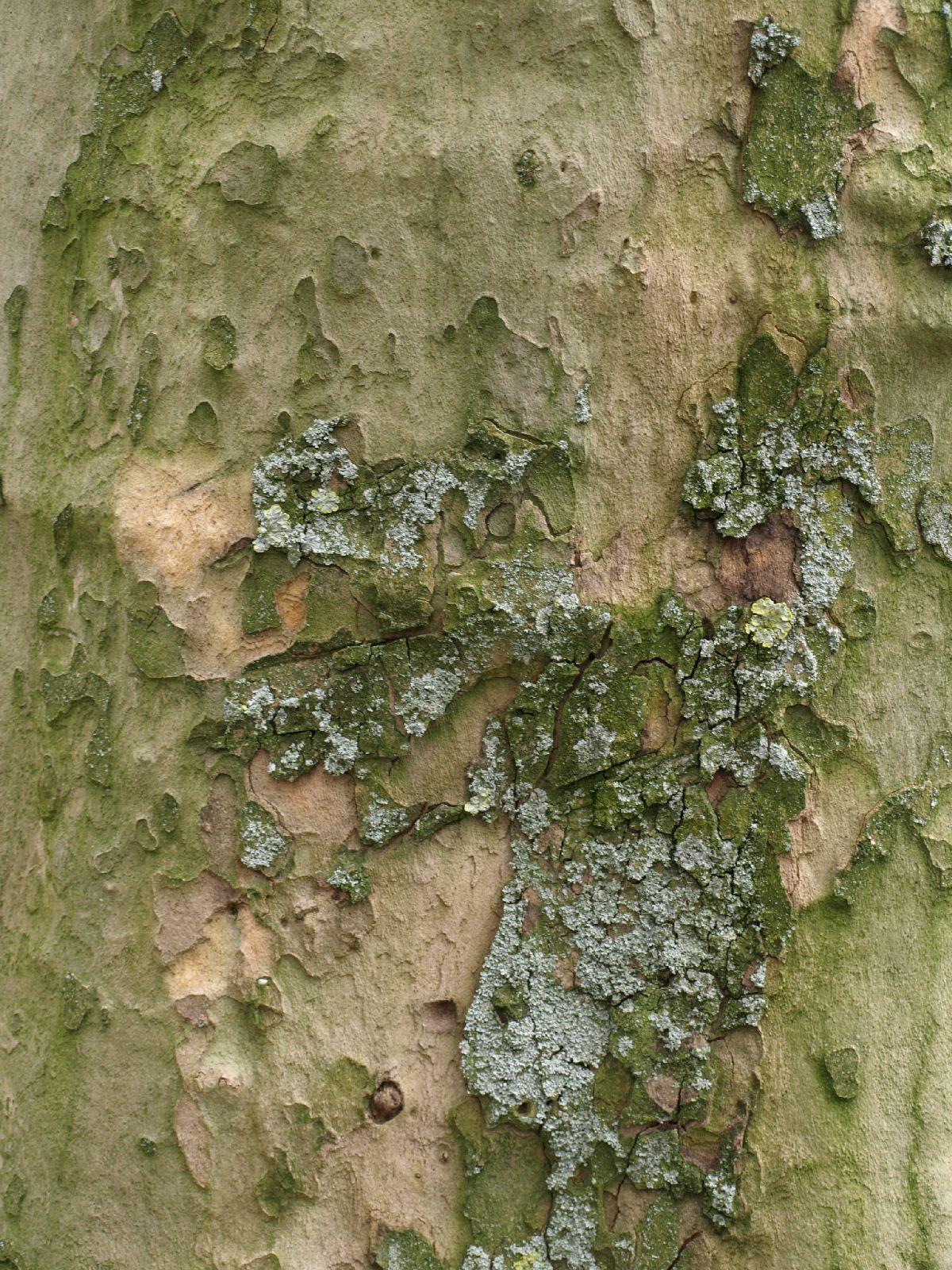 Baum-Rinde_Textur_A_P4120840