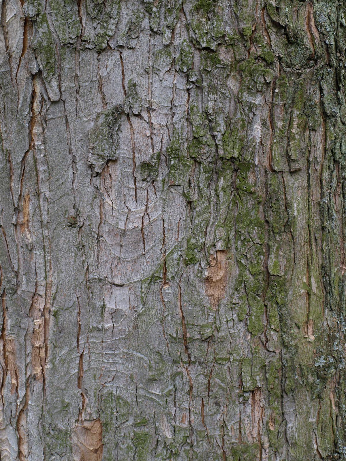Baum-Rinde_Textur_A_P4120846