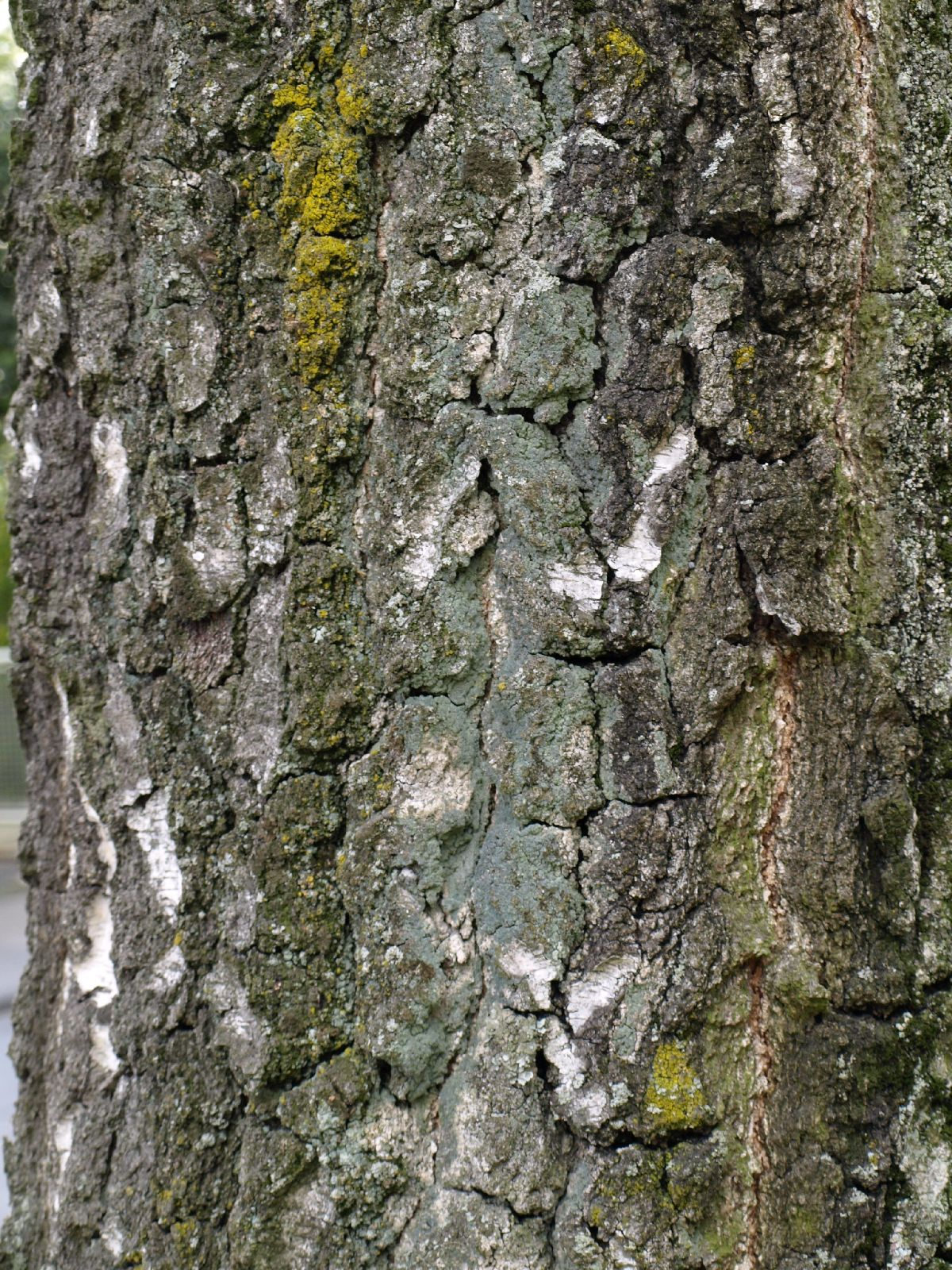 Baum-Rinde_Textur_A_P4120903