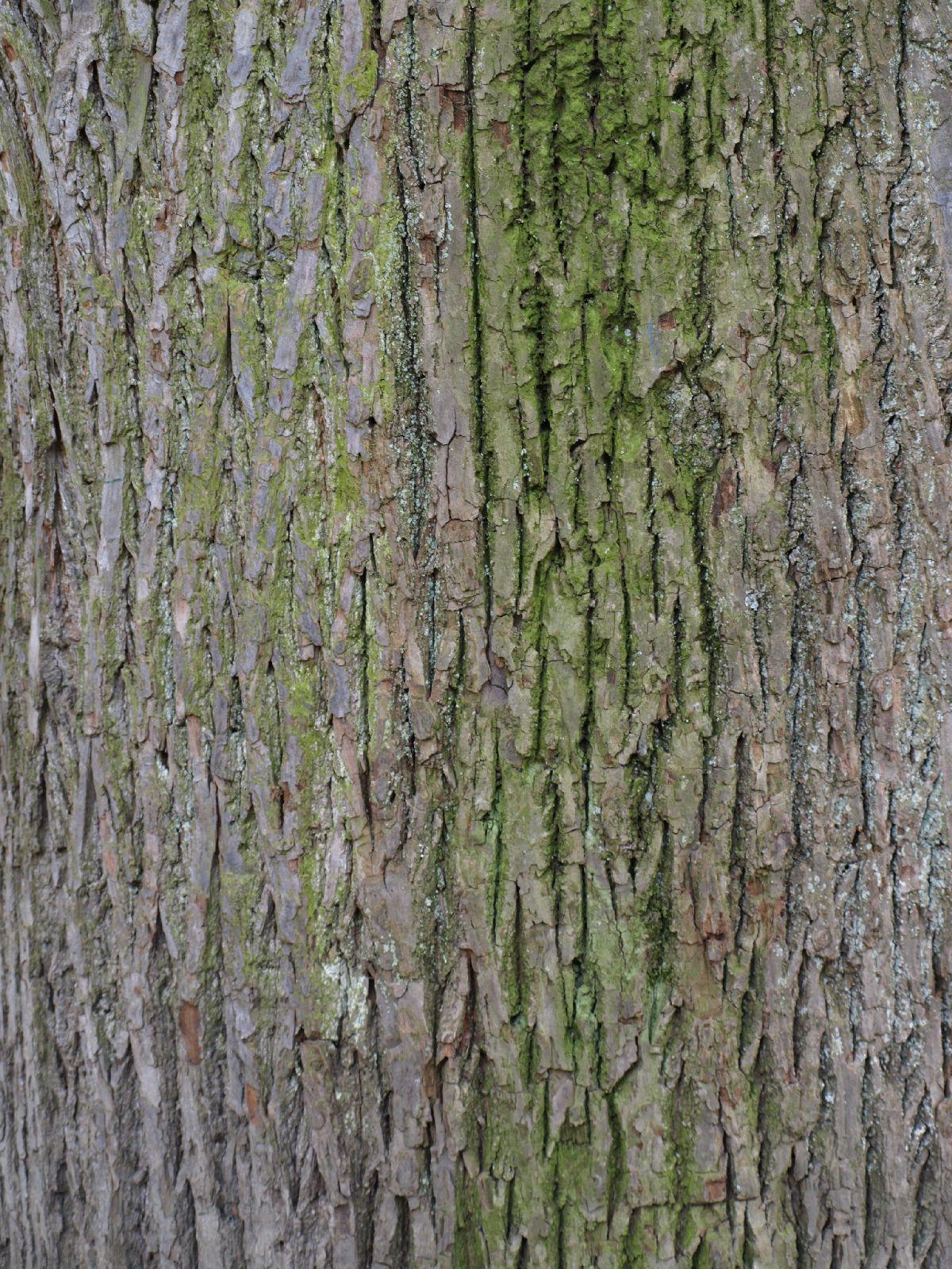 Baum-Rinde_Textur_A_P4120932