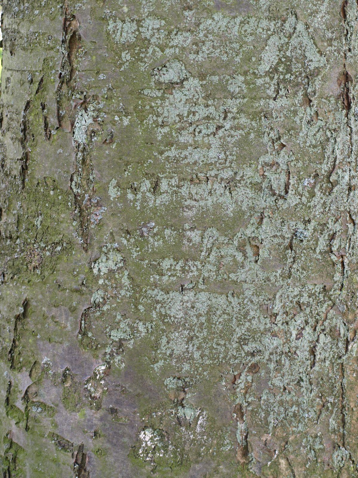 Baum-Rinde_Textur_A_P4120950