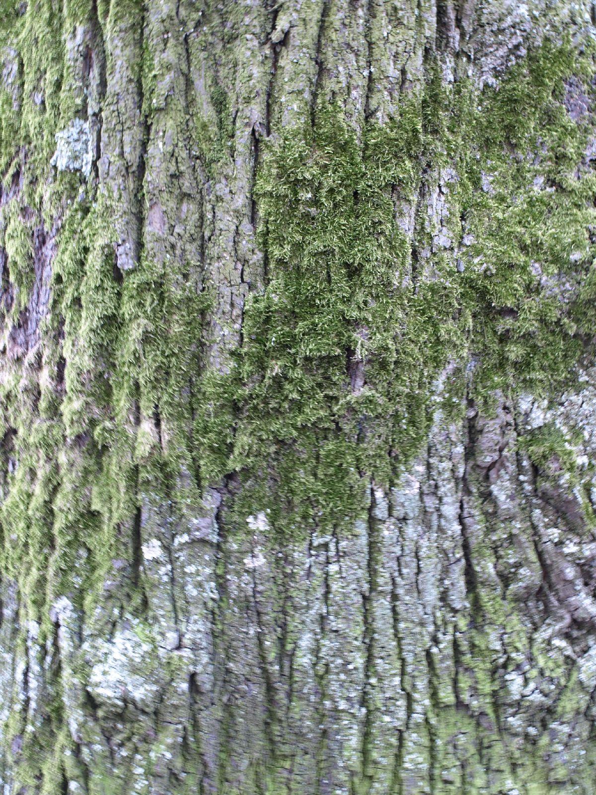 Baum-Rinde_Textur_A_P4120995