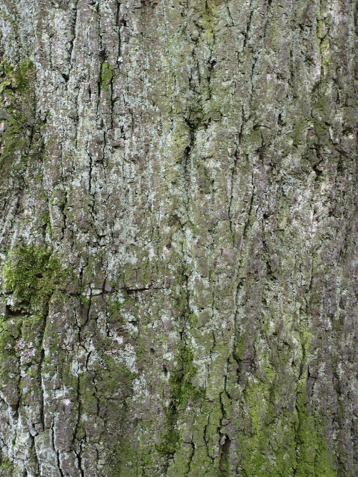 Baum-Rinde_Textur_A_P4120998