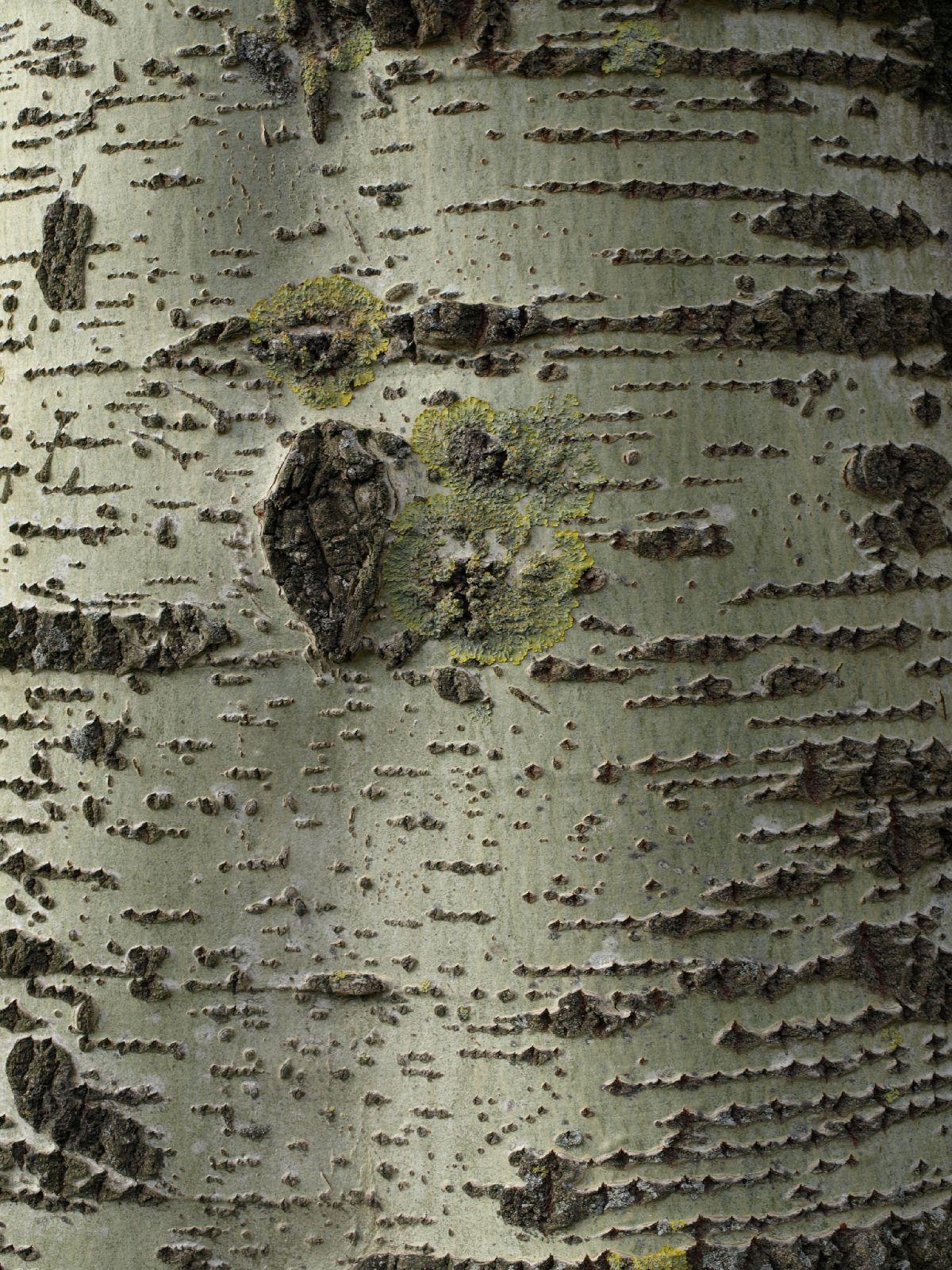 Baum-Rinde_Textur_A_P4171317
