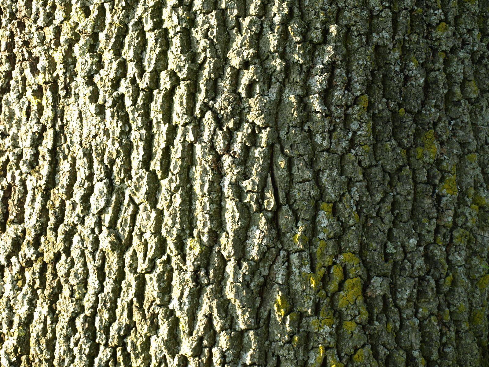 Baum-Rinde_Textur_A_P5122737