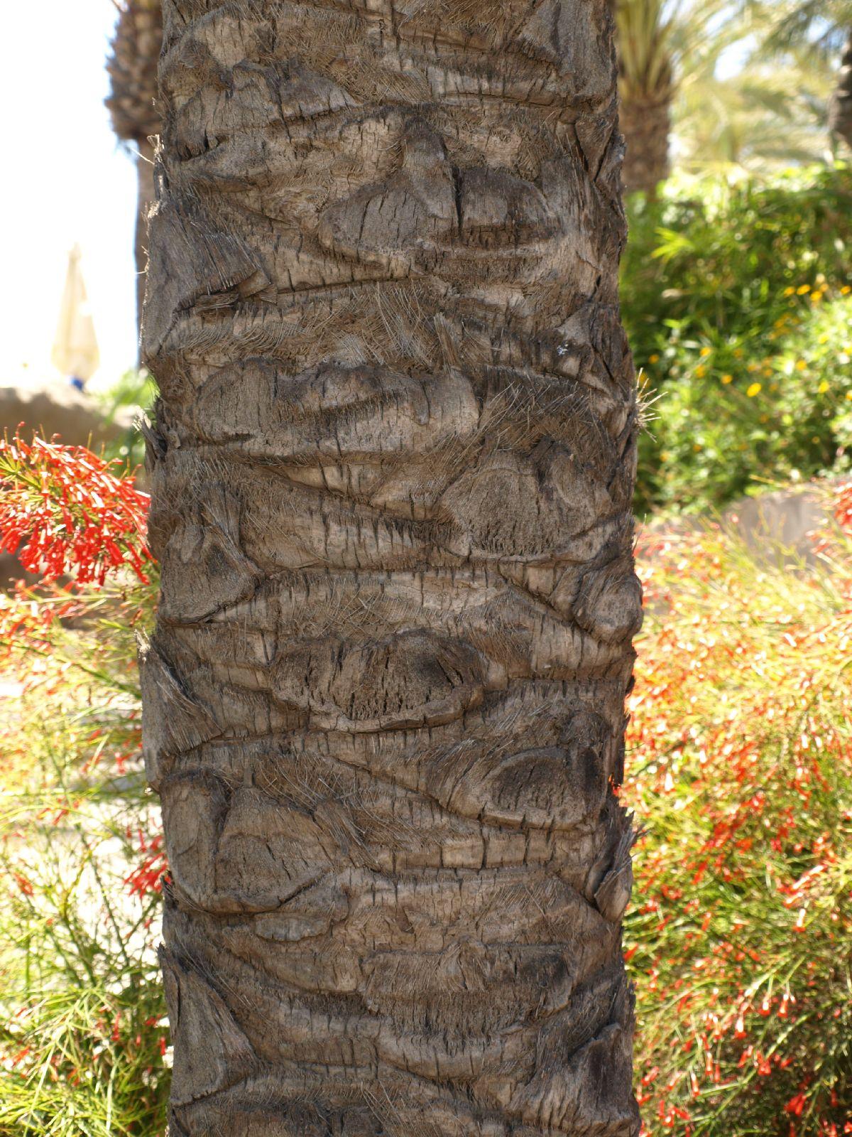 Baum-Rinde_Textur_A_P5224349