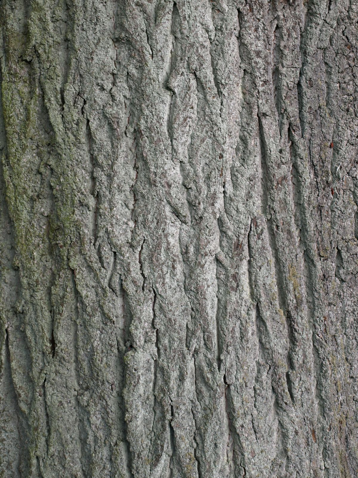 Baum-Rinde_Textur_A_P9285584