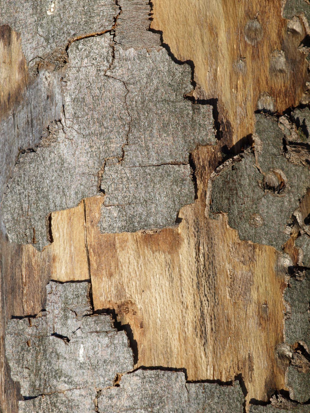 Baum-Rinde_Textur_A_PA180273