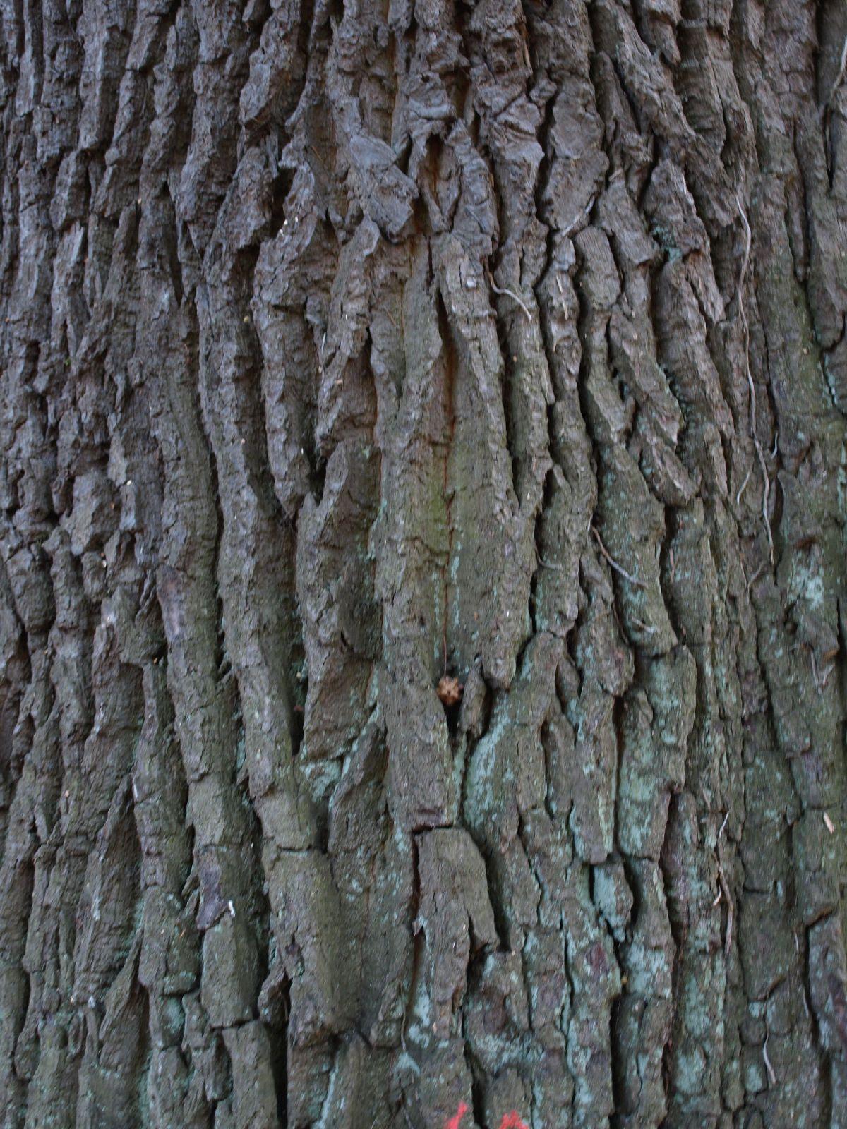 Baum-Rinde_Textur_A_PA256334